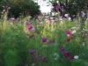 jachere-fleurie